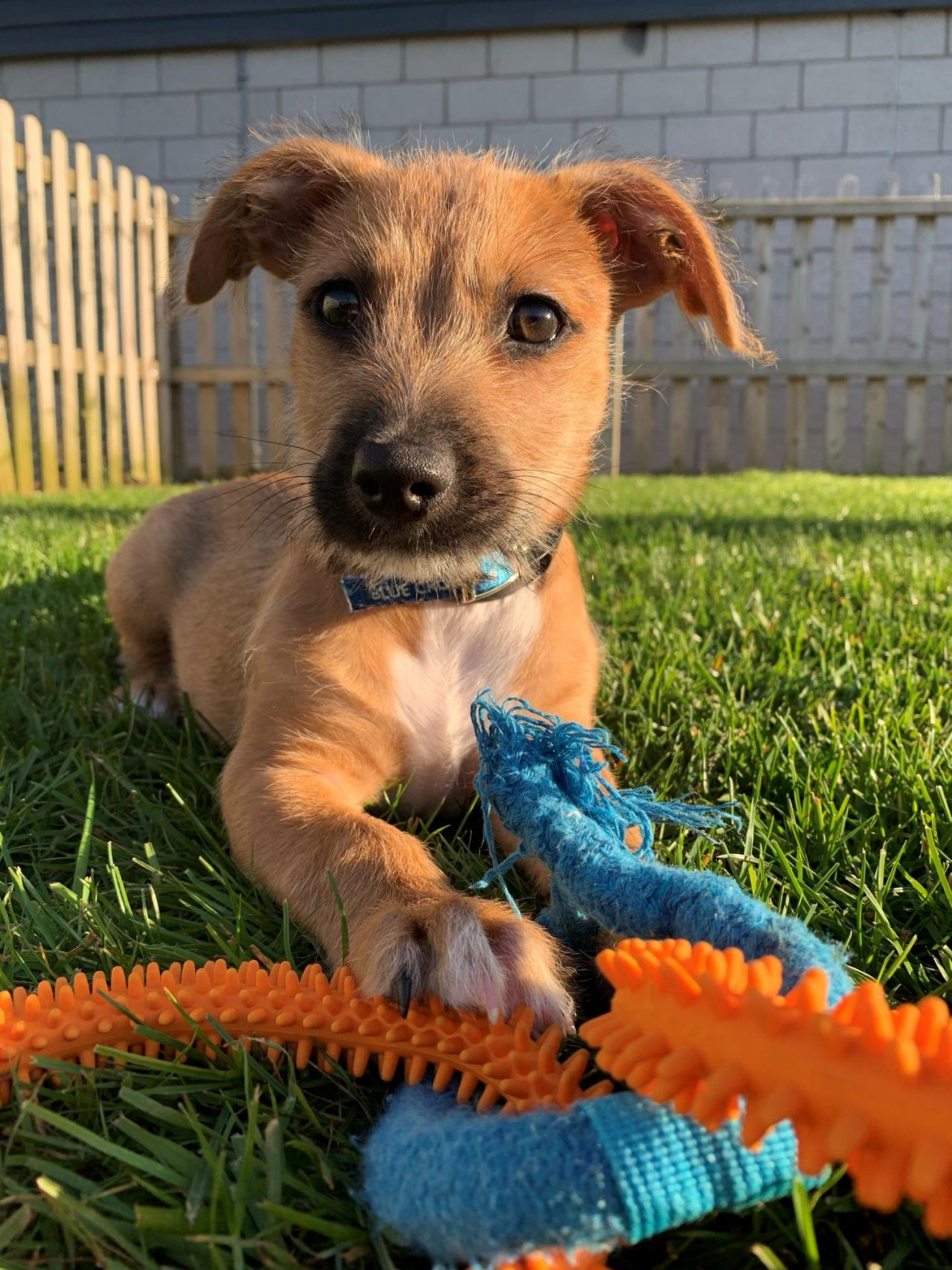 Together for Animals: Stray puppy's fresh start