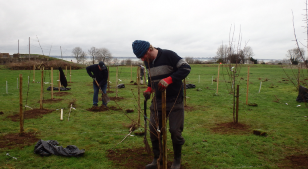 Slough Fort Preservation Trust receives grant to plant community orchard