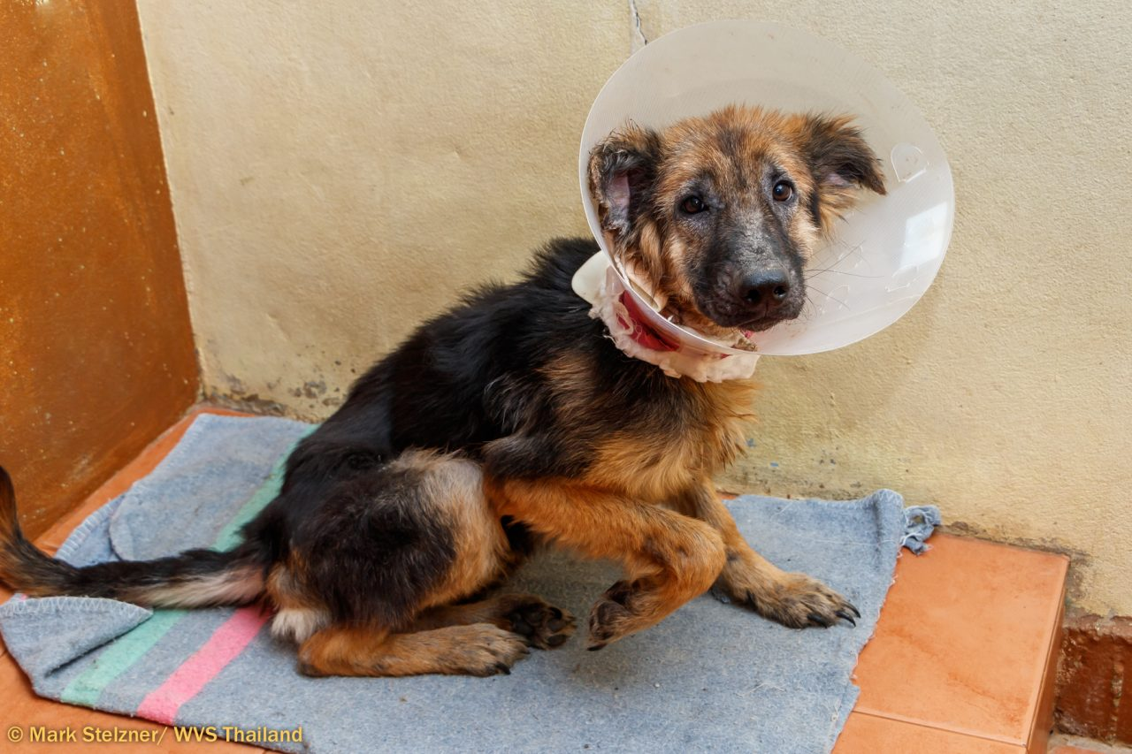 Vet charity pairs beloved UK pets with those in need abroad