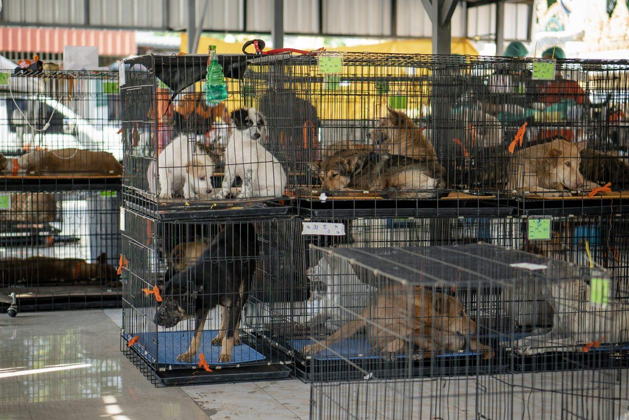 Dogs Trust Worldwide helping street dogs in Thailand