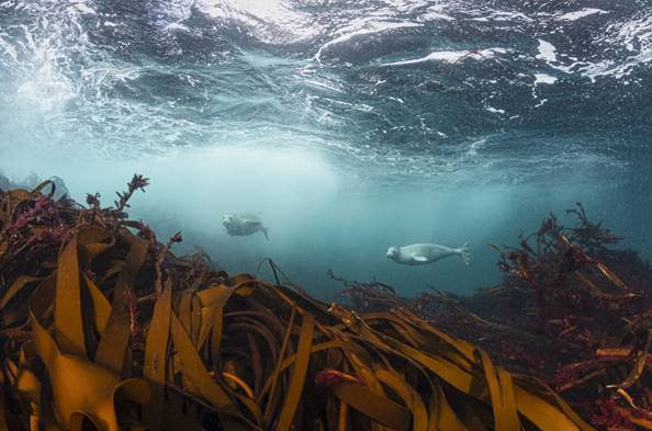 The underwater wonders of the UK's seas, a story in photographs