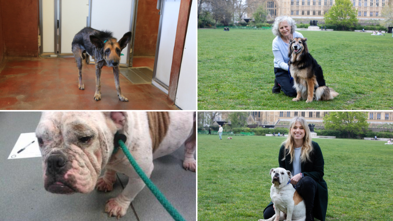 Campaign success for five-year maximum animal cruelty sentences