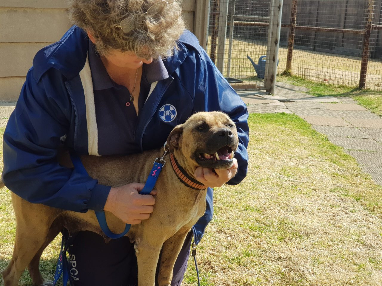 Dogs Trust Worldwide helping tackle dog fighting in South Africa in latest round of grants