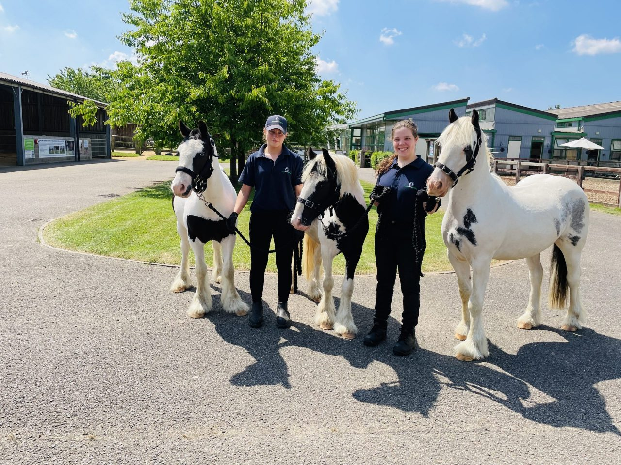 Together for Animals: Rescued cobs have a bright future ahead of them